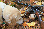 Grouse, woodcock, double barreled shotgun, and Yellow Lab with fall foliage.