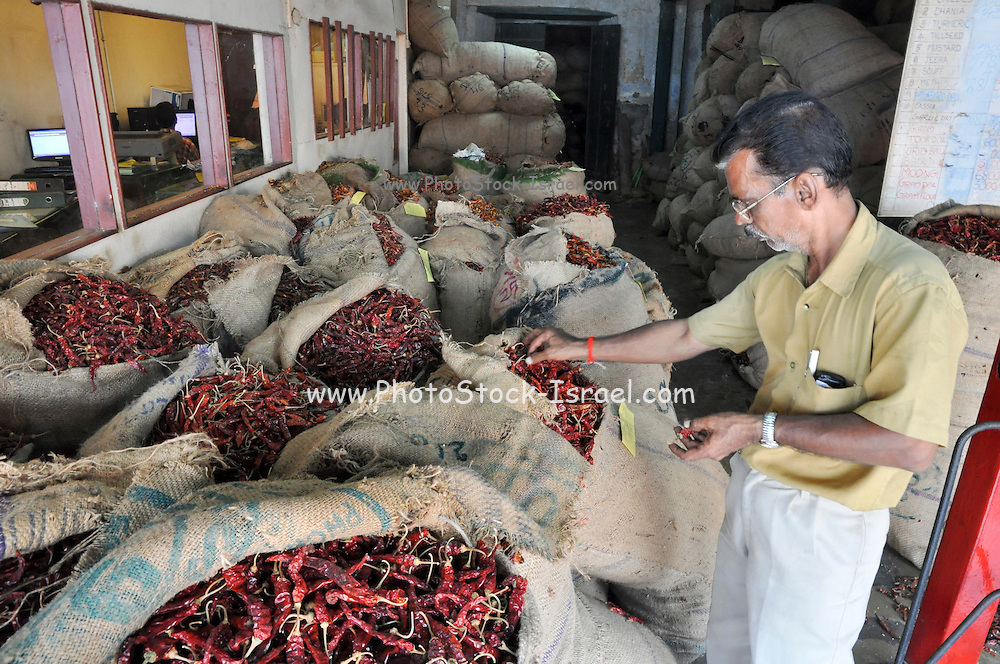 Dried hot Chilli Peppers at a spice store in India, Kerala, Kochi (formerly known as Cochin)