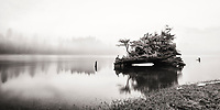 Scenic image of a nurse log in Nehalem Bay, OR
