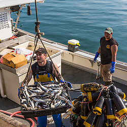 Sternman Jackson Feener (left) and Captain Erick Harjula. loading bait onto Harjula's lobster boat, 'Redeemed' at the Spruce Head Fisherman's Co-op in South Thomaston, Maine.