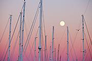 Masts of the yachts at the Newport Shipyard as a september fullmoon rises