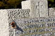 Red Admiral butterfly rests on a gravestone in St Peter and St Paul Church graveyard, Checkendon, Oxfordshire, United Kingdom