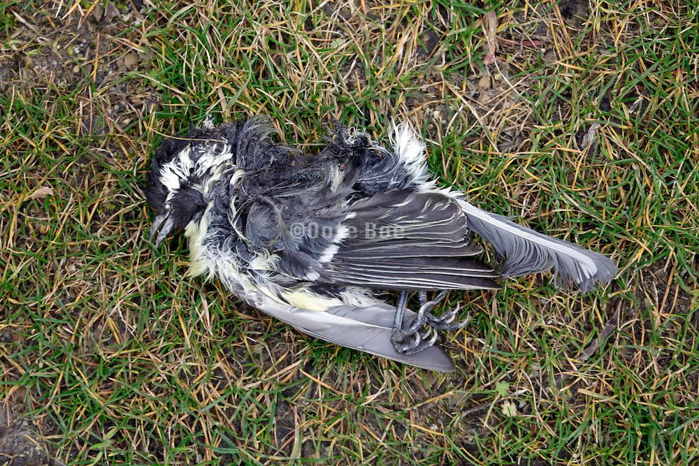 dead bird on grass