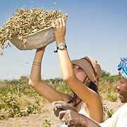 Under the watchful eyes of a local farmer, Peace Corps volunteer Rachael Honick learns to separate peanuts from unnecessary plant matter. Koumbadiouma, Kolda, Senegal