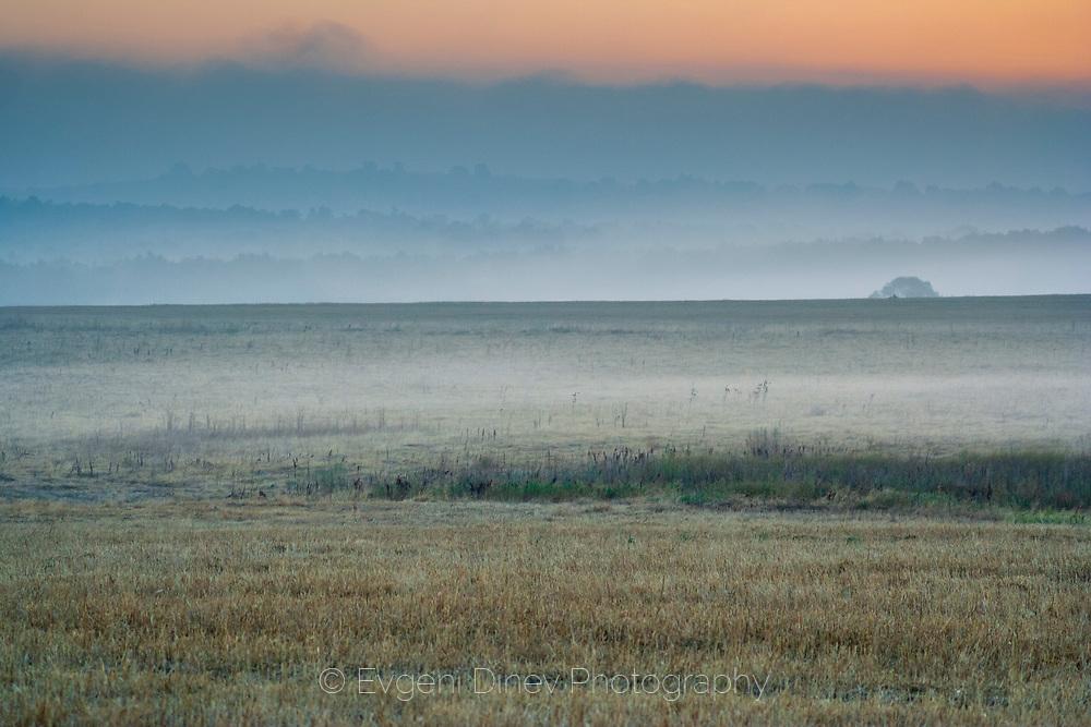 Misty summer morning in wilderness