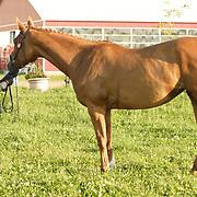 Equus 3D Horse Trials - Young Event Horse