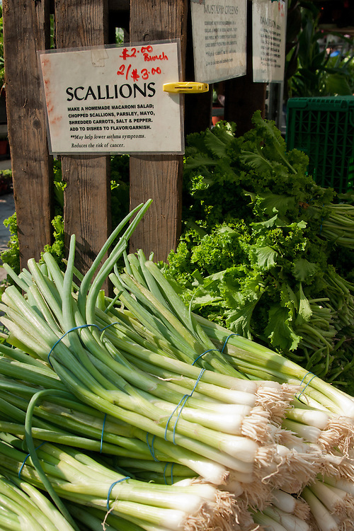 Scallions and mustard greens for sale, Union Square Greenmarket, New York City.