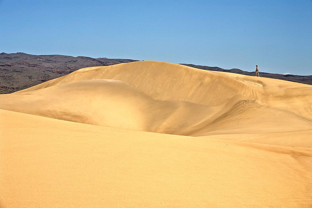 España. Islas Canarias. Gran Canaria. Maspalomas.Parque Natural de las dunas de Maspalomas..©JOAN COSTA....
