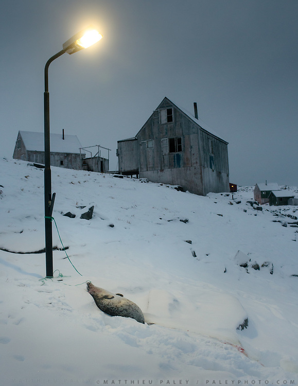 While unloading the boat, the seal is left near a street lamp. Returning in Isortoq after a successful seal hunt, with hunters Bent and Dina Igniatiussen. Life in and around the small Inuit settlement of Isortoq (population of 64), in East Greenland.