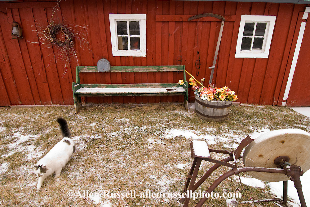 Farm cat, red barn, grindstone, PROPERTY RELEASED