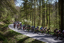 The peloton weave through the trees at La Flèche Wallonne Femmes 2018, a 118.5 km road race starting and finishing in Huy on April 18, 2018. Photo by Sean Robinson/Velofocus.com