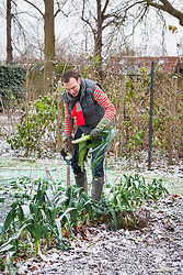 Harvesting leeks in the snow and frost