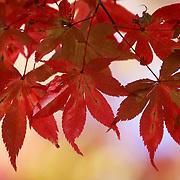 Autumn foliage in Kyoto, Japan