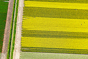 Nederland, Flevoland, Gemeente Noordoostpolder, 07-05-2015; bollenvelden met tulpen en narcissen in de nieuwe bollenstreek. Noordoostpolder ten noordoosten van Rutten. <br /> Bulb fields with tulips and daffodils. Northeast Polder, the new flower bulb region.<br /> luchtfoto (toeslag op standard tarieven);<br /> aerial photo (additional fee required);<br /> copyright foto/photo Siebe Swart