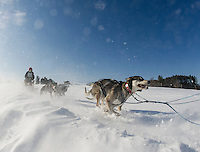 Through drifting snow a driver leads his dog team out on the trail for the final Open Class race of the 86th annual Laconia World Championship Sled Dog Races Sunday afternoon.  (Karen Bobotas Photographer
