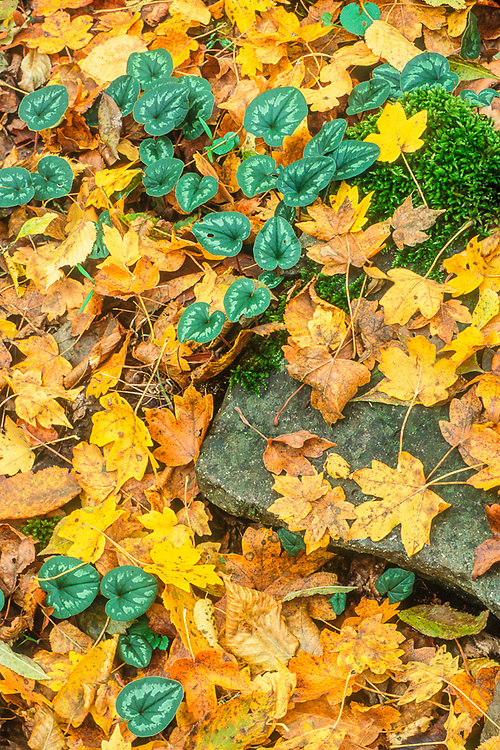 Autumn ground pattern near the Green Monsestery, Borgomi-Kharaguli, The Country of Georgia