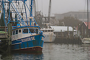 Shrimp boats docked along Shem Creek on a foggy winter morning in Charleston, South Carolina.