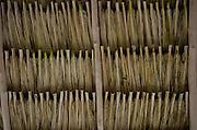 Palm Leaf Roof<br /> San Pedro<br /> Ambergris Caye<br /> Belize<br /> Central America