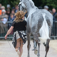 Badminton 2014 - First Inspection
