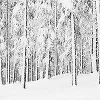 CH, 2021-001, winter forests and mountains