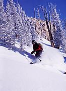 Alpine skier Dylan Crossman enjoying deep powder at Alta, Little Cottonwood Canyon, Wasatch Range, Utah.