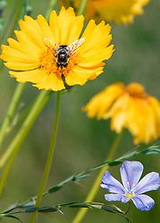 A fly buzzing around my fresh garden blooms
