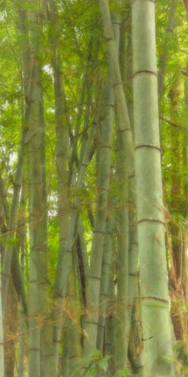 Green Bamboo Watercolor