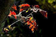 Bashakill Autumn 2013