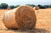 Wheat fields after grain harvest bales of straw ready for collection