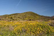 Flowers, Leo Carrillo State Park, Pacific Coast Highway, Malibu, California
