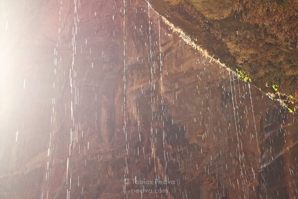 Trickle of water seeping out of the cliff face at Weeping Rock, in Zion National Park, Utah.