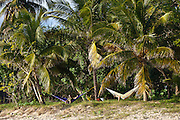 Hammocks strung from coconut palms along the beach in Vieques Island, Puerto Rico.