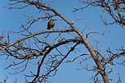 Wildlife near Tombstone photographs Arizona, USA