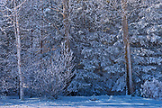 Snow and hoarfrost on trees<br />
