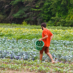 Farmhand Tom Crimer walks through a field of vegetables at the Crimson and Clover Farm in Northampton, Massachusetts.