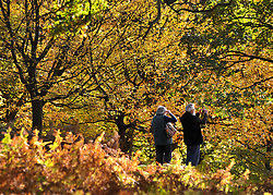© Licensed to London News Pictures. 01/11/2011. Kew, UK. A couple look at the view. People enjoy the Autumn sunshine in Richmond Park today, 1st November 2011. Parts of the UK are experiencing higher than average temperature for the time of year.  Photo credit : Stephen Simpson/LNP