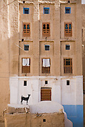 """A goat stands outside an apartment in Shibam, Hadhramawt, Yemen. Shibam is a World Heritage Site. The old walled city with it's talk mud brick buildings has been called 'the Manhattan of the desert""""."""