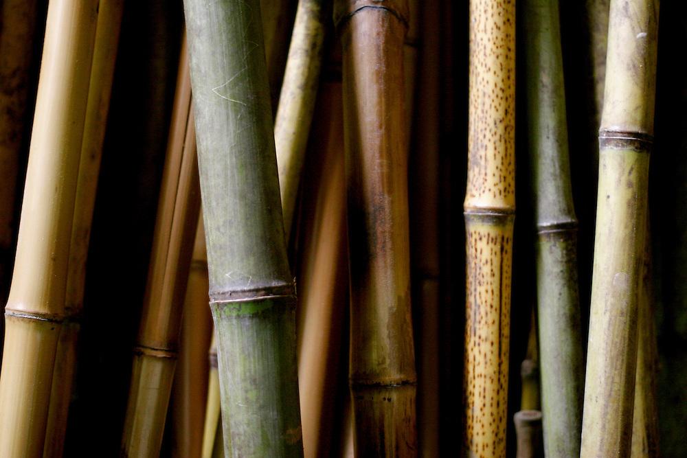 Belo Horizonte - MG, Brasil...BAMCRUS - Bambuzeria Cruzeiro do Sul em Belo Horizonte. Na foto detalhe de bambus...BAMCRUS - Bambuzeria Cruzeiro do Sul in Belo Horizonte. In this photo detail of bamboos...FOTO: LEO DRUMOND / NITRO