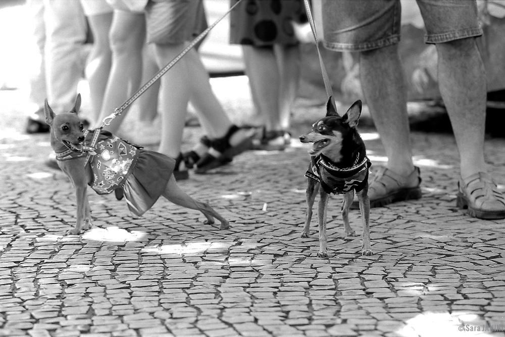 Rio de Janeiro, Brasil, America