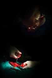 Veterinary surgeon, Arnwood Veterinary Surgery, Nottingham.