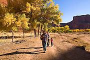 Cottonwood tree, Canyon de Chelly, Navajo Reservation, Arizona