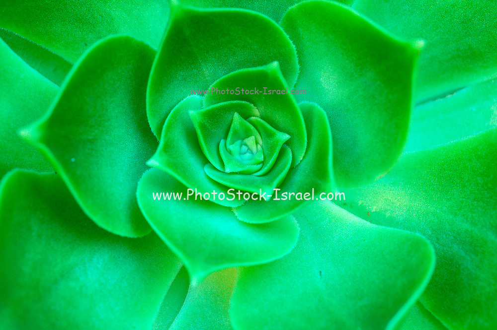 Green leaf formation background and texture