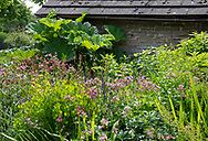 A border of Astrantia, Salvia and Sanguisorba menziesii next to an old stone barn at Stockton Bury Gardens, Leominster, Herefordshire, UK