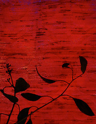 'Red and Black Textile Design,' 2009, photograph by Catherine Herrera, Flor de Miel Fotos,