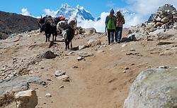 """THEMENBILD - Nepalesen mit Yaks am Weg nach Gorak Shep. Wanderung im Sagarmatha National Park in Nepal, in dem sich auch sein Namensgeber, der Mount Everest, befinden. In Nepali heißt der Everest Sagarmatha, was übersetzt """"Stirn des Himmels"""" bedeutet. Die Wanderung führte von Lukla über Namche Bazar und Gokyo bis ins Everest Base Camp und zum Gipfel des 6189m hohen Island Peak. Aufgenommen am 19.05.2018 in Nepal // Trekkingtour in the Sagarmatha National Park. Nepal on 2018/05/19. EXPA Pictures © 2018, PhotoCredit: EXPA/ Michael Gruber"""