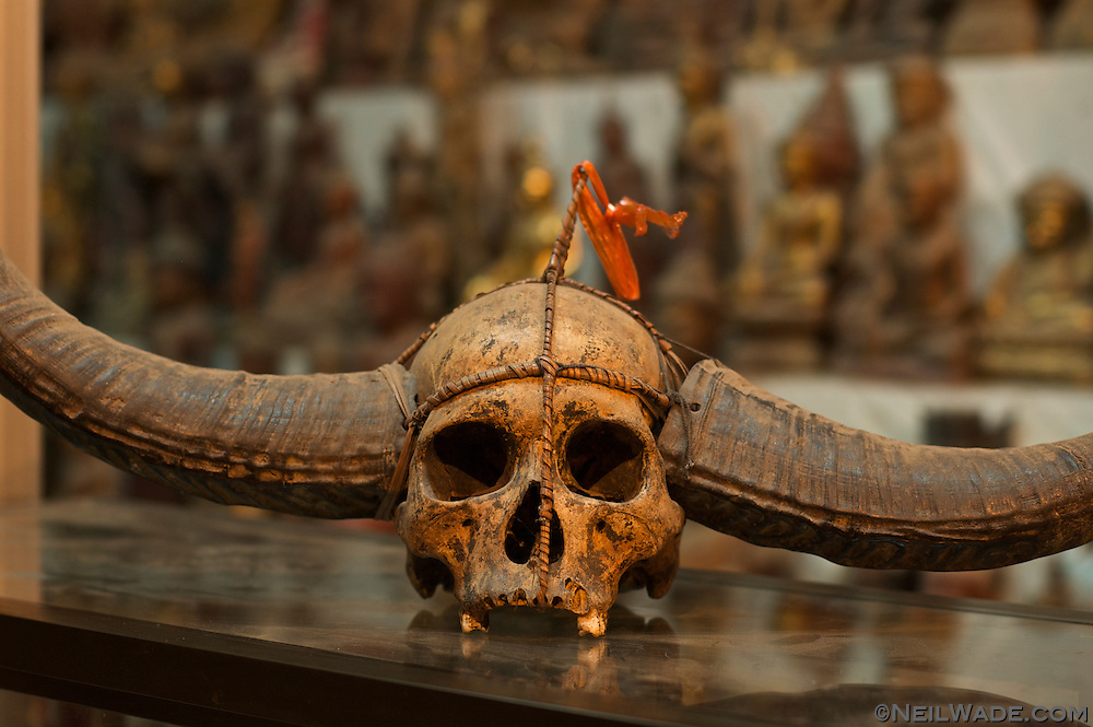 A human skull fitted with waterbuffalo horns as found in a store in Mandalay, Myanmar.