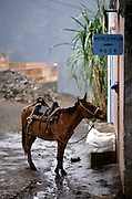 A horse waits outside a grocery store in one of the little villages in Paul Valley in the northeast zone of Santo Antao island. This area has a microclimate that makes it the only part of the archipelago where it rains regularly and where many vegetables and fruits grow.