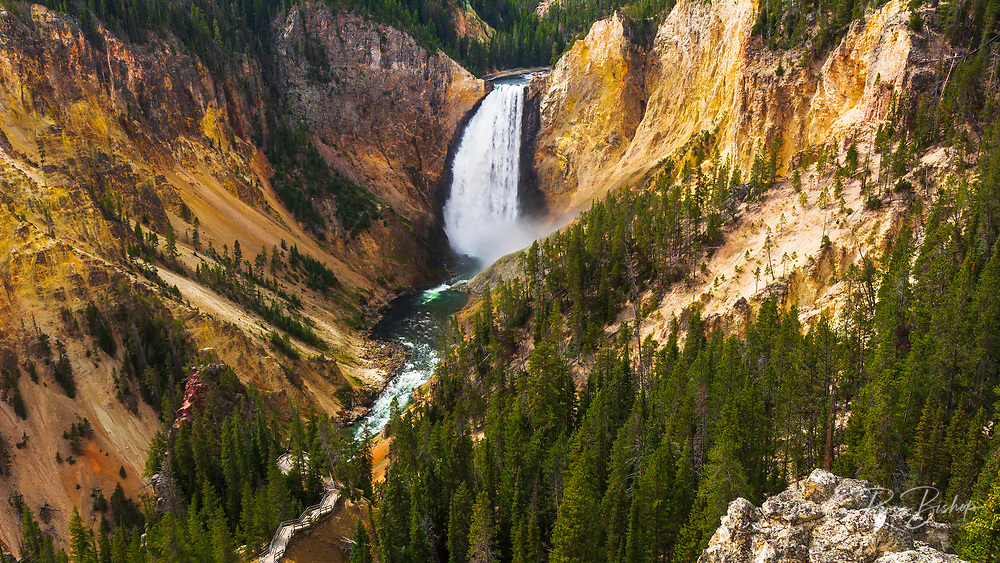Lower Yellowstone Falls from Lookout Point, Yellowstone National Park, Wyoming USA