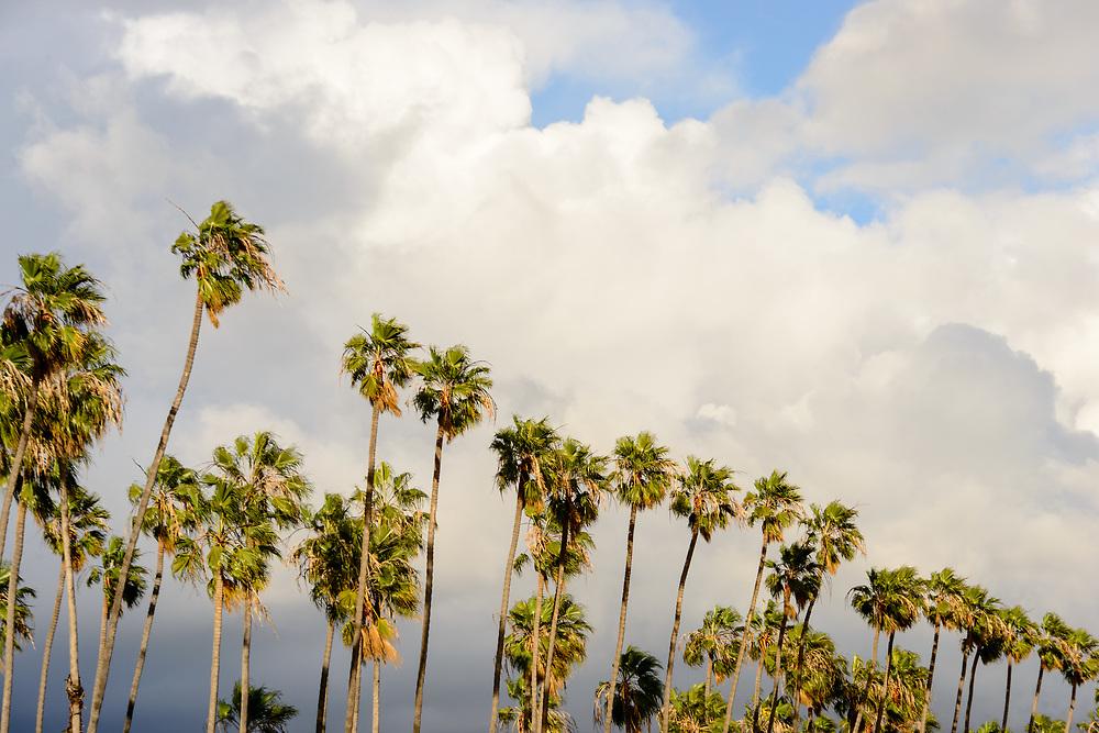 Chase Palm Park, Santa Barbara, California