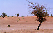 Landscape - Podor Senegal